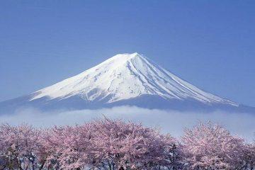 Top 4 ngành được chọn nhiều nhất khi du học Nhật Bản